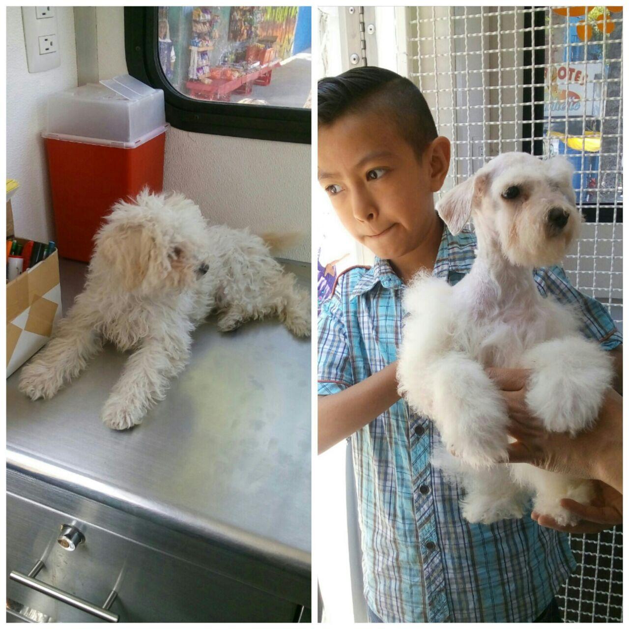 Inculcar el respeto y cuidado de los animales de compañía previene el abandono