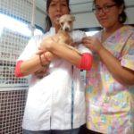 Jornadas veterinarias #PorElBuenVivir
